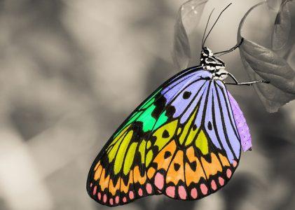 Las hermanas Mirabal, las mariposas